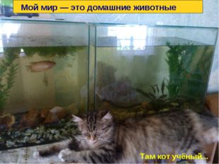 Мой мир — это домашние животные Там кот учёный...