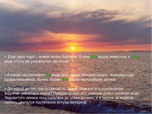 Ещё одно чудо – живая жизнь Байкала. В нём 848 видов животных и 133 вида сто