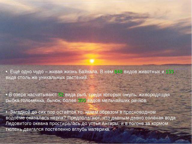 Ещё одно чудо – живая жизнь Байкала. В нём 848 видов животных и 133 вида сто...