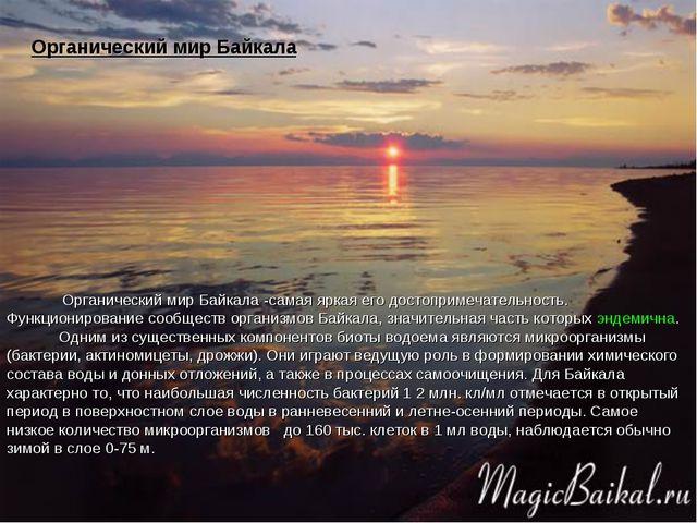 Органический мир Байкала -самая яркая его достопримечательность. Функциониро...