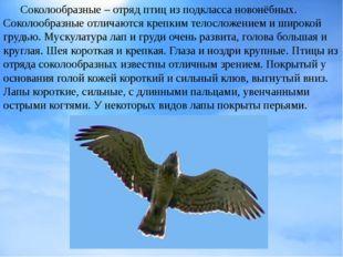 Соколообразные – отряд птицизподклассановонёбных. Соколообразные отличают