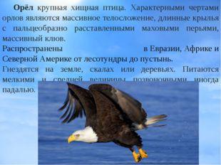 Орёл крупная хищная птица. Характерными чертами орлов являются массивное тел