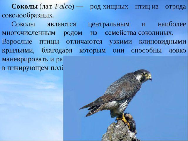 Соколы(лат.Falco)— родхищных птициз отряда соколообразных. Соколы явля...