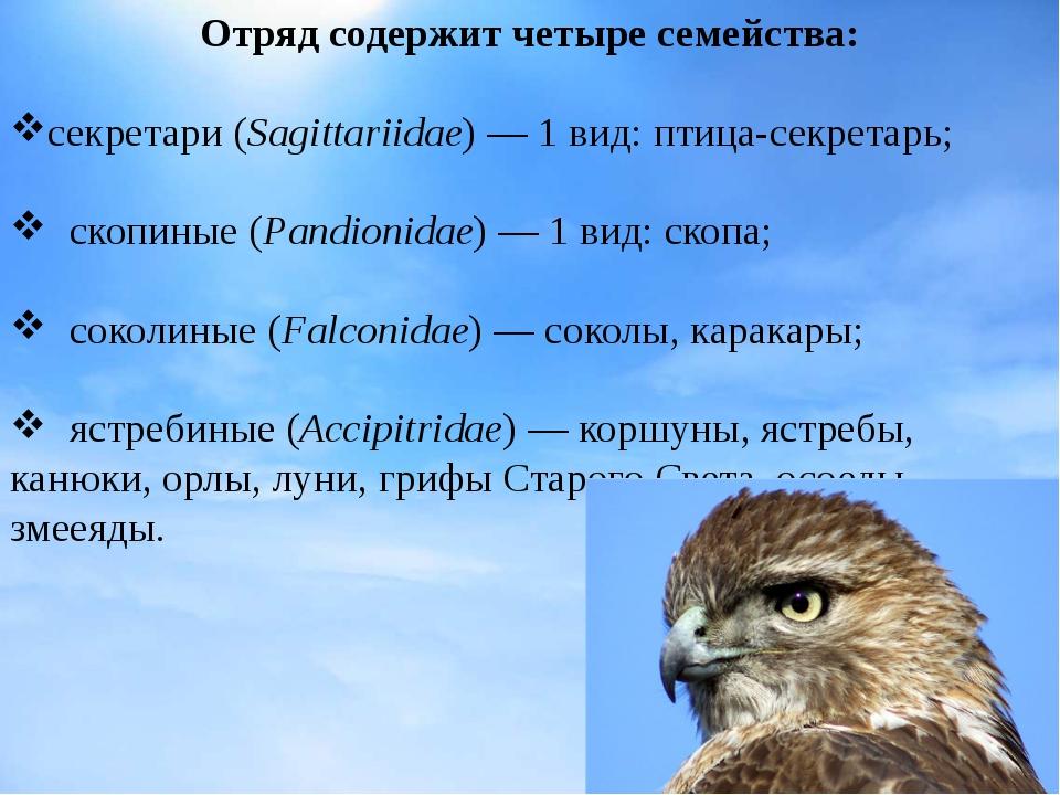 Отряд содержит четыре семейства: секретари(Sagittariidae)— 1 вид:птица-сек...