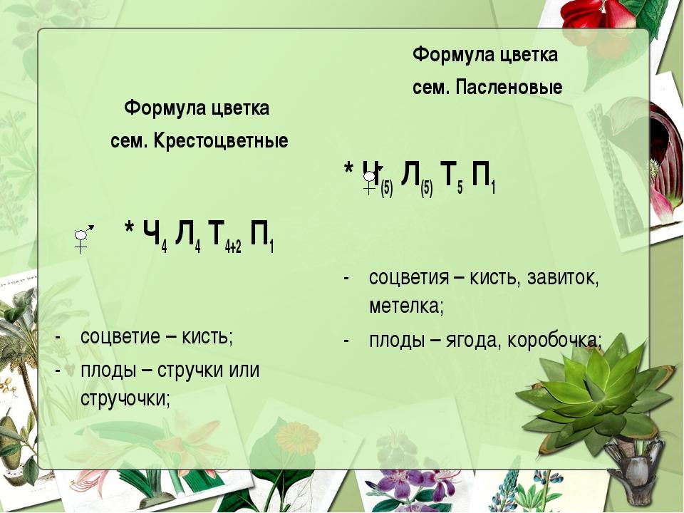 Формула цветка сем. Крестоцветные Формула цветка сем. Пасленовые * Ч4 Л4 Т4+2...