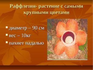 Раффлезия- растение с самыми крупными цветами диаметр – 90 см вес – 10кг пахн