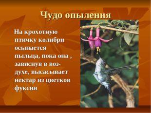 Чудо опыления На крохотную птичку колибри осыпается пыльца, пока она , зависн