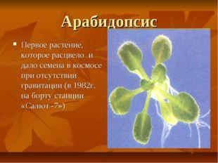 Арабидопсис Первое растение, которое расцвело и дало семена в космосе при отс