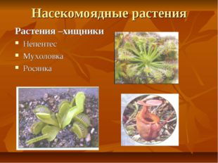 Насекомоядные растения Растения –хищники Непентес Мухоловка Росянка