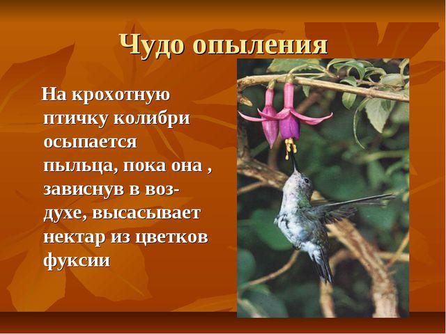 Чудо опыления На крохотную птичку колибри осыпается пыльца, пока она , зависн...