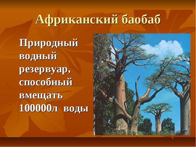 Африканский баобаб Природный водный резервуар, способный вмещать 100000л воды