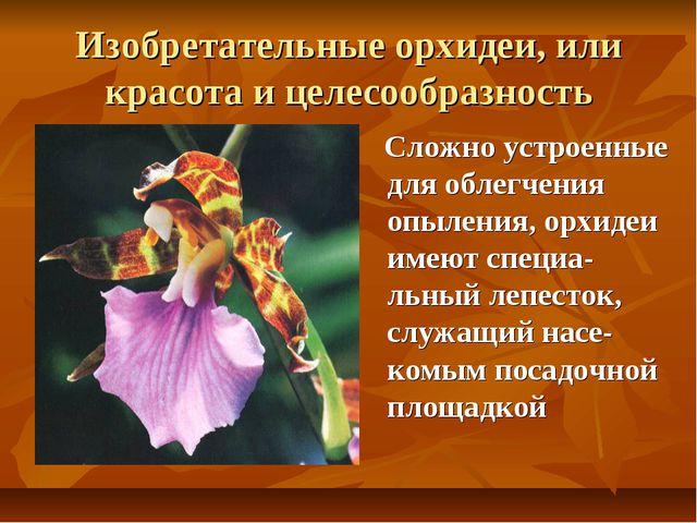 Изобретательные орхидеи, или красота и целесообразность Сложно устроенные для...