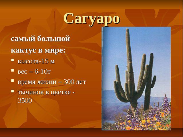 Сагуаро самый большой кактус в мире: высота-15 м вес – 6-10т время жизни – 30...