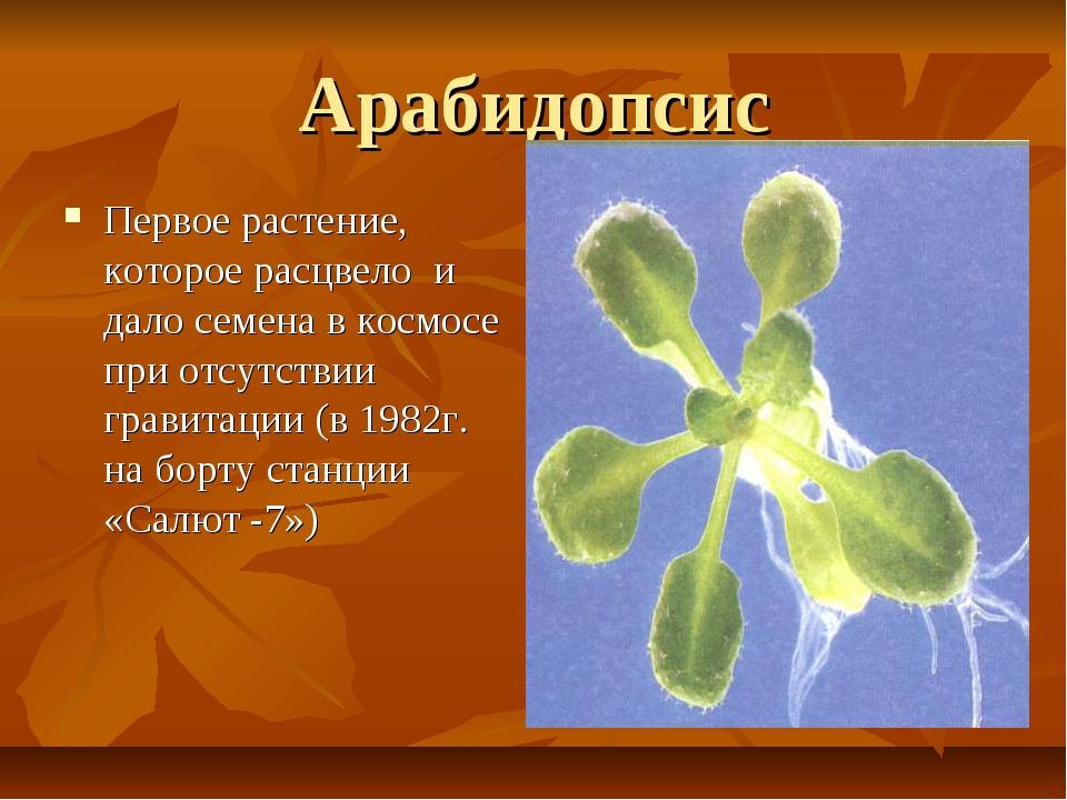 Арабидопсис Первое растение, которое расцвело и дало семена в космосе при отс...