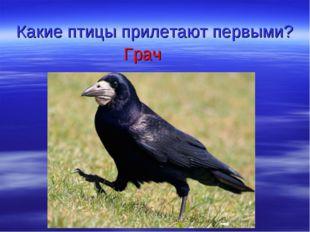 Какие птицы прилетают первыми? Грач