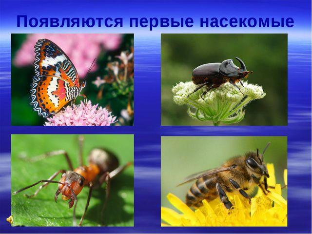 Появляются первые насекомые