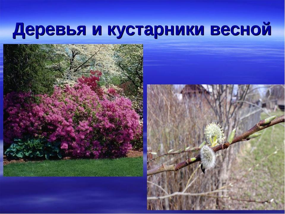 Деревья и кустарники весной