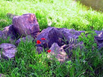 http://visitdonetsk.info/images/priroda/step1.jpg