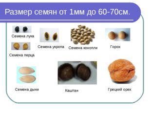Размер семян от 1мм до 60-70см. Семена лука Семена перца Семена укропа Семена