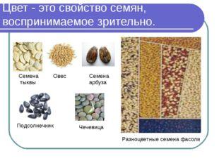Цвет - это свойство семян, воспринимаемое зрительно. Семена тыквы Овес Семена
