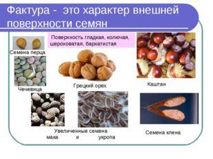 Фактура - это характер внешней поверхности семян Семена перца Грецкий орех Ка
