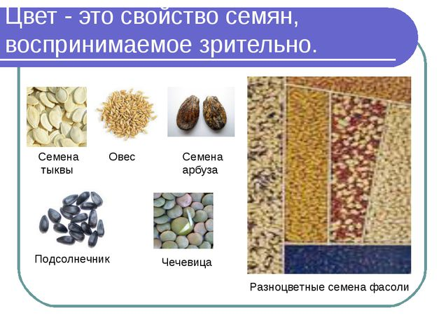 Цвет - это свойство семян, воспринимаемое зрительно. Семена тыквы Овес Семена...