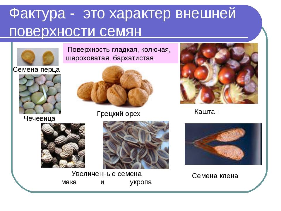 Фактура - это характер внешней поверхности семян Семена перца Грецкий орех Ка...