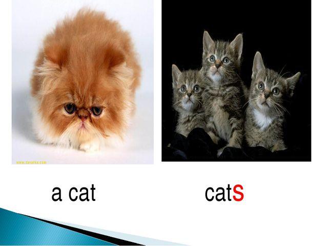 a cat cats