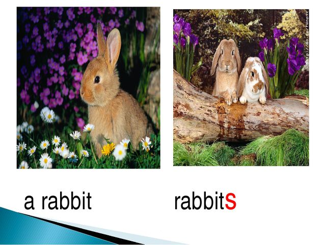 a rabbit rabbits