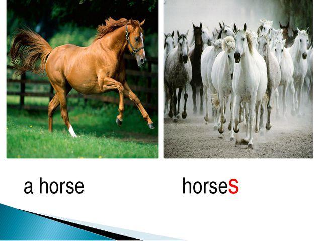 a horse horses