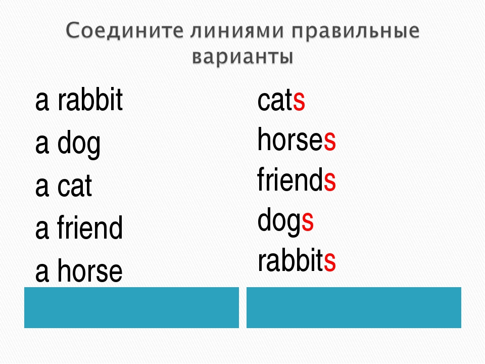a rabbit a dog a cat a friend a horse cats horses friends dogs rabbits