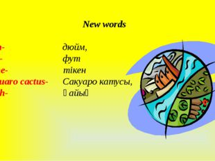 New words inch- дюйм, foot- фут spine- тікен Saquaro cactus- Сакуаро катусы,