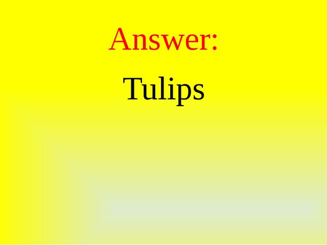 Answer: Tulips