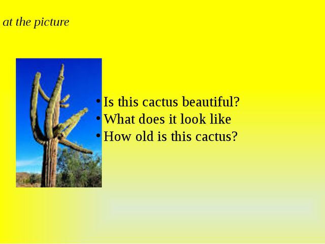 Look at the picture Is this cactus beautiful? What does it look like How old...