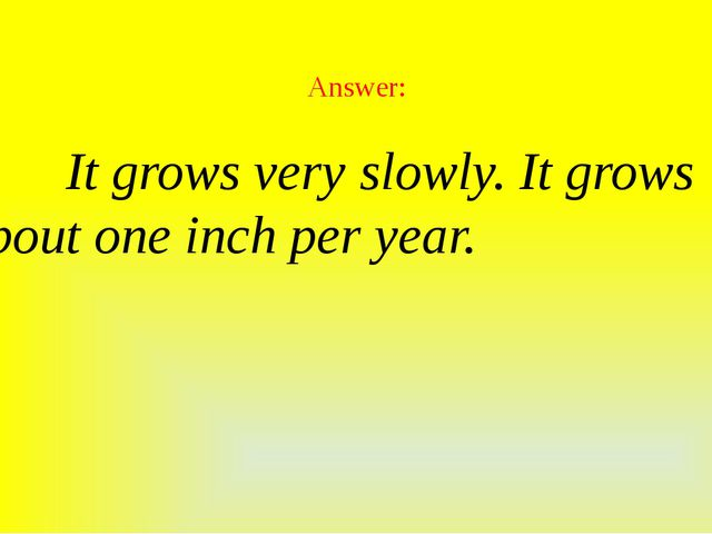 Answer:  It grows very slowly. It grows about one inch per year.