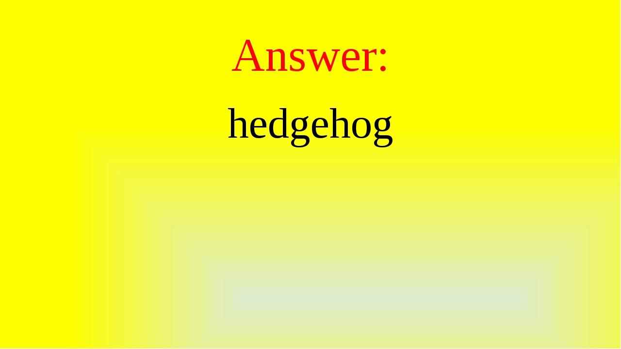 Answer: hedgehog