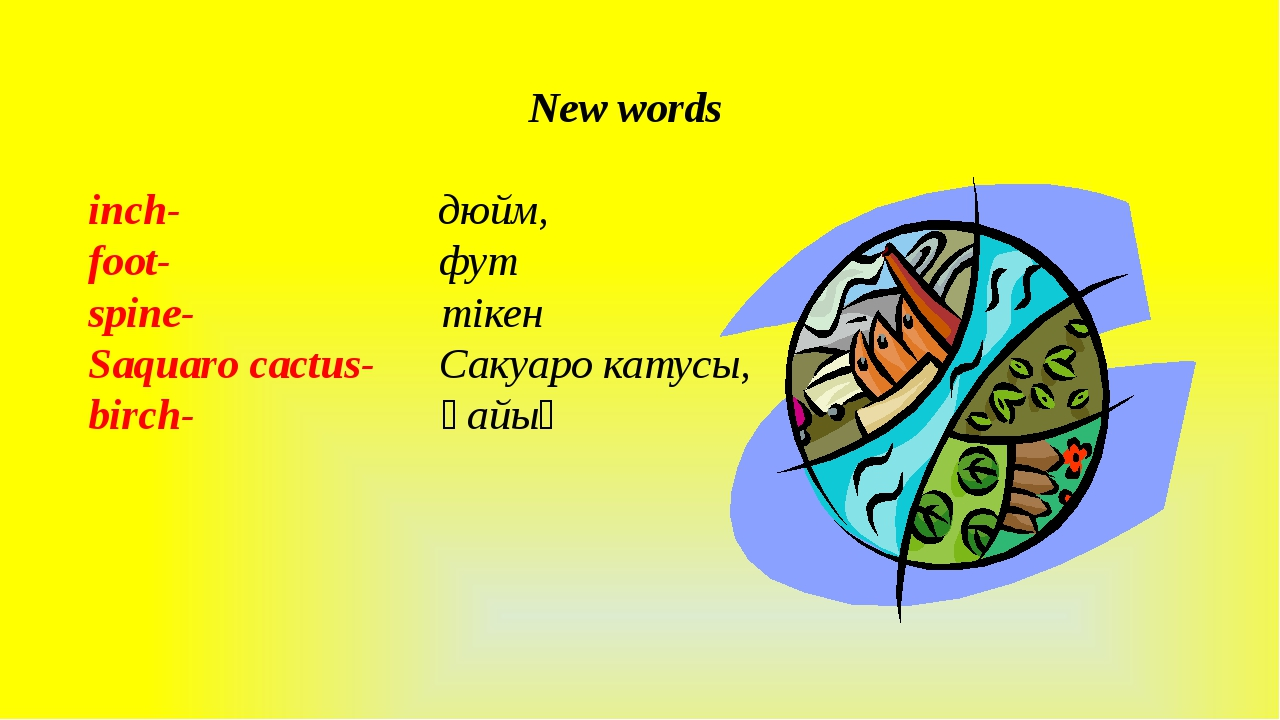 New words inch- дюйм, foot- фут spine- тікен Saquaro cactus- Сакуаро катусы,...