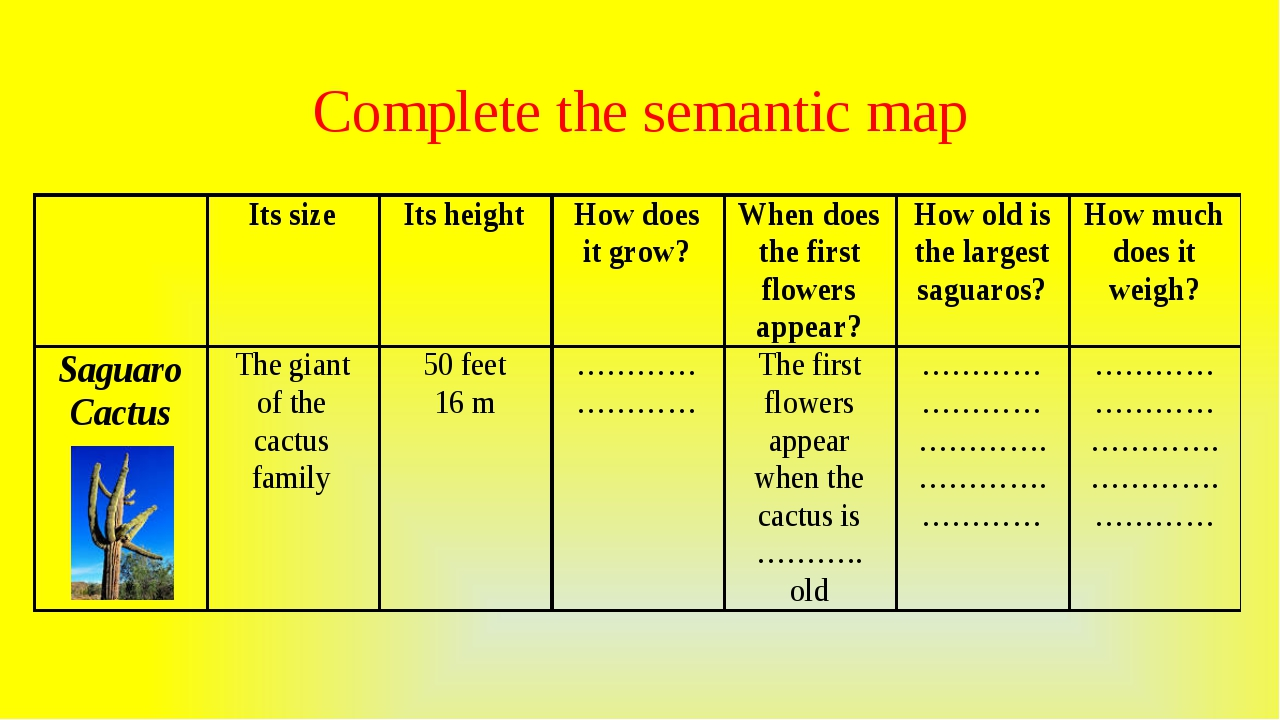 Complete the semantic map