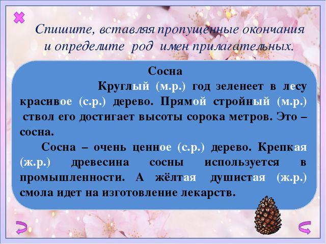 Сосна   Круглый (м.р.) год зеленеет в лесу красивое (с.р.) дерево. Прямой...