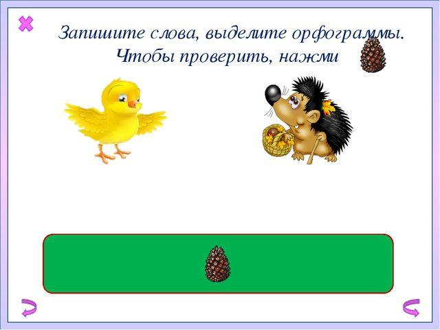 Запишите слова, выделите орфограммы. Чтобы проверить, нажми жёлтый цыпленок...