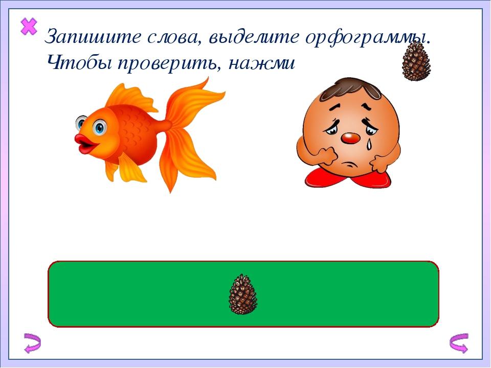 Запишите слова, выделите орфограммы. Чтобы проверить, нажми золотая рыбка гр...