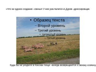 «Что за чудное создание –свинья! У нее ума палата!»А.Дуров –дрессировщик. Куд