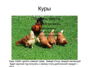 Куры Куры любят щипать свежую траву. Заведя птицу, каждый желающий будет круг