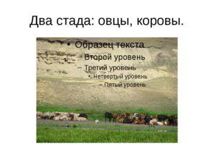 Два стада: овцы, коровы.