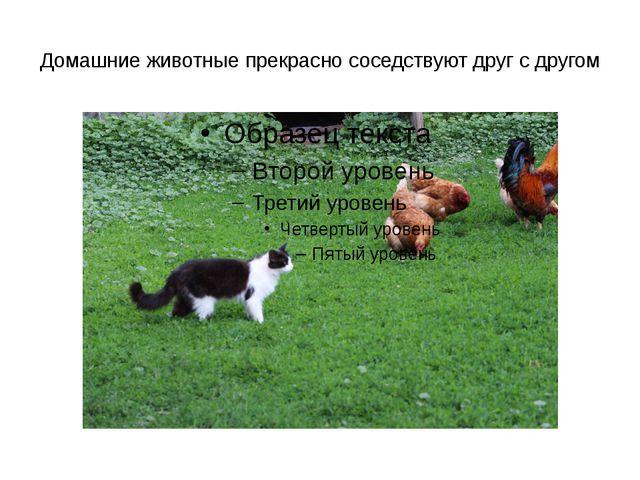 Домашние животные прекрасно соседствуют друг с другом