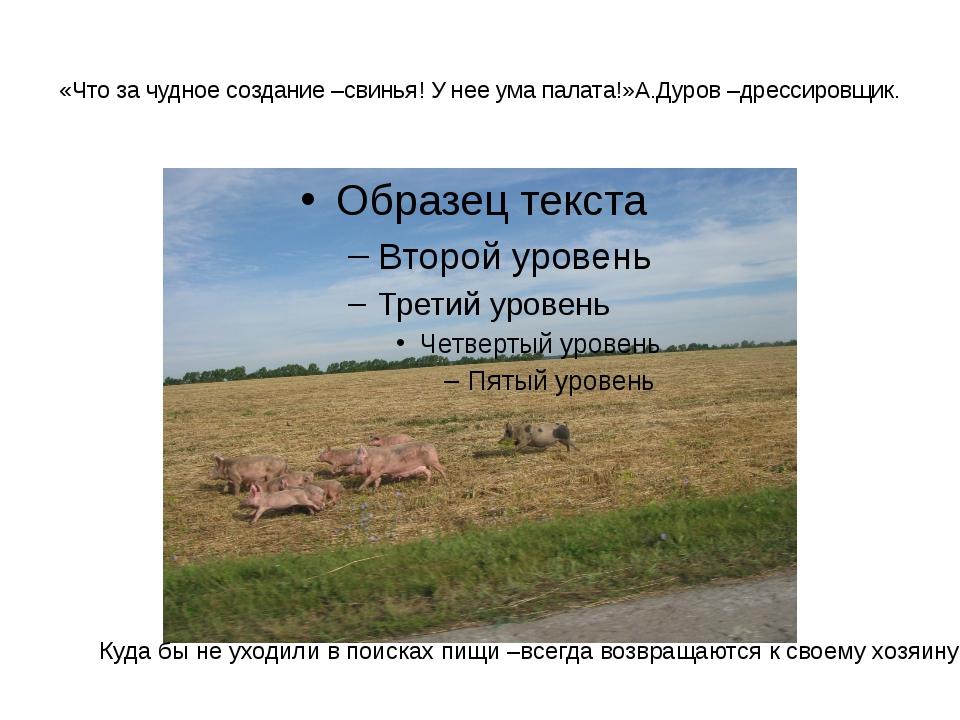 «Что за чудное создание –свинья! У нее ума палата!»А.Дуров –дрессировщик. Куд...
