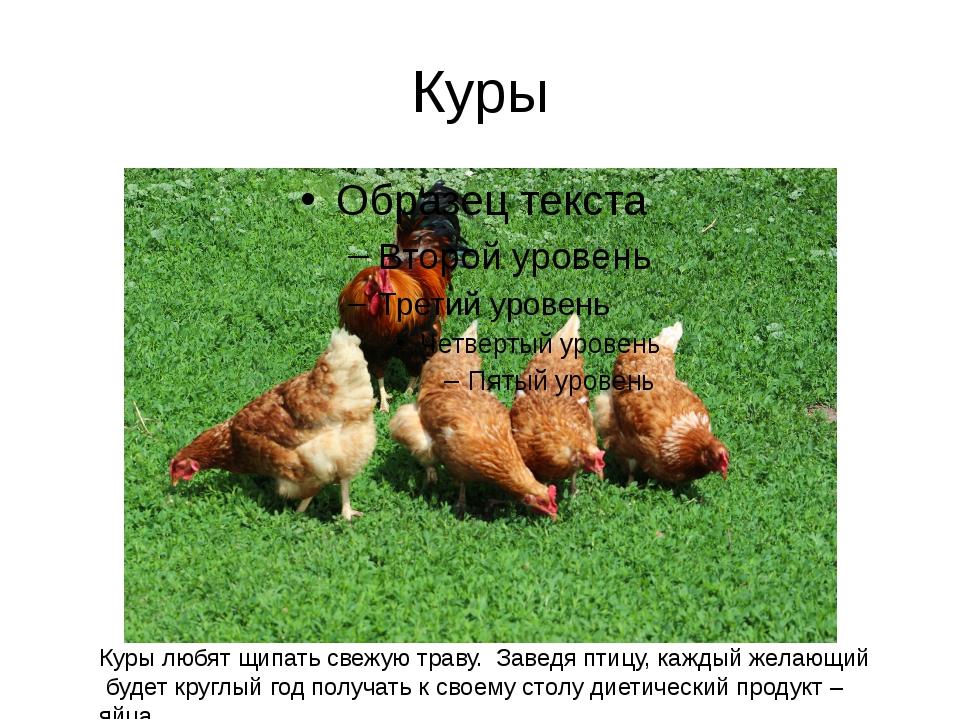 Куры Куры любят щипать свежую траву. Заведя птицу, каждый желающий будет круг...