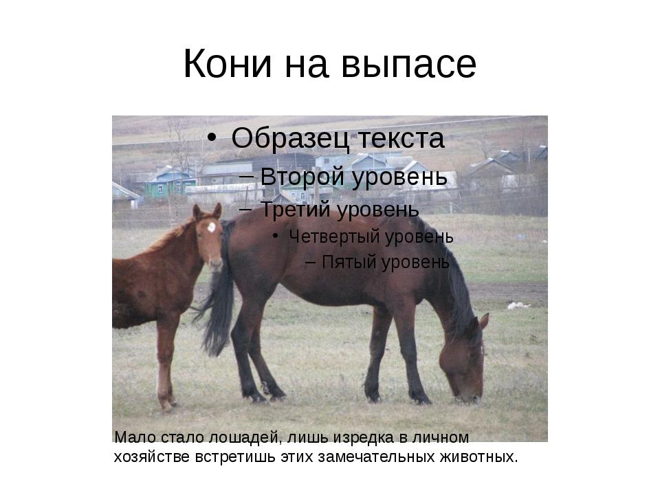 Кони на выпасе Мало стало лошадей, лишь изредка в личном хозяйстве встретишь...