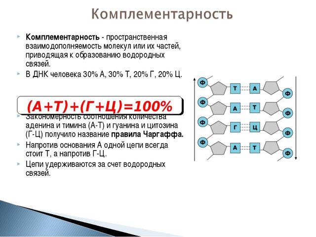 Комплементарность - пространственная взаимодополняемость молекул или их часте...