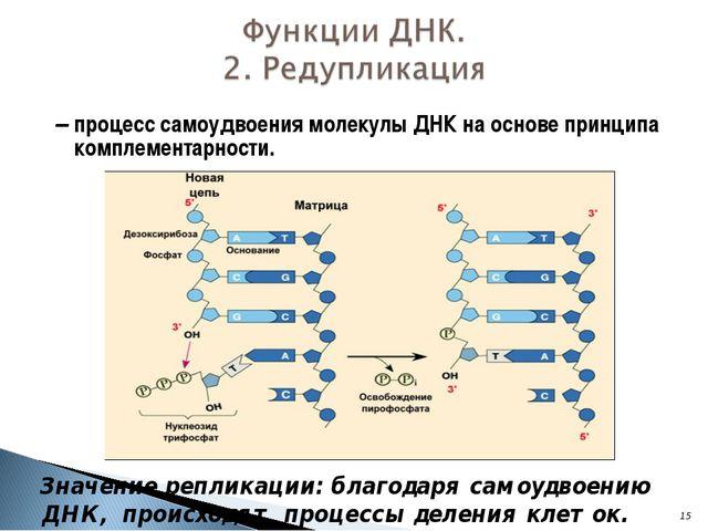 – процесс самоудвоения молекулы ДНК на основе принципа комплементарности. *...